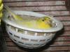 Самочка на гнезде