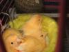 Малыши в гнезде