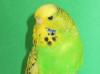 Зеленый спенгл
